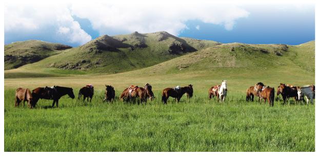 NS乳酸菌|モンゴル平原